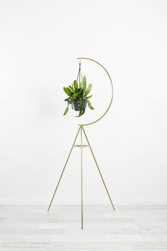 Capra Designs Crescent Plant Stand is made from powder coated steel. It is now available in a limited edition brushed brass. Pre-order yours to avoid disappointment. Tall Plant Stands, Metal Plant Stand, Tall Plant Stand Indoor, Tall Plants, Indoor Plants, Indoor Herbs, Indoor Gardening, Garden Plants, House Plants