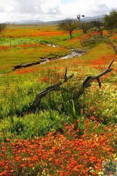 Namaqualand is famous for its impressive fields of Namaqua daisies and other wildflowers. This beautiful region of South Africa was made famous by nature photographer, Freeman Patterson. Places To Travel, Places To See, Beautiful World, Beautiful Places, Beautiful Flowers, Daisy Field, Out Of Africa, Africa Travel, Beautiful Landscapes