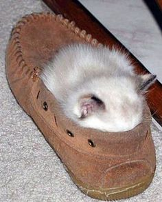 <b>Cats like to sit in really weird places, like shoes apparently.</b> Still, cats do seem to have quite an eye for a fresh pair of kicks.