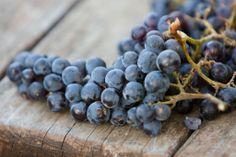 Wine | YUMBRIA! - THE VERY HEART OF ITALIAN TASTE  www.yumbria.com