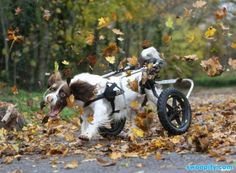 Too Fast Too Furious - Doggy Version #humor #lol #funny