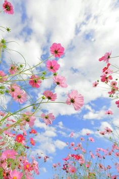 beautiful flowers wallpapers Breathing in the freshness.true and pure Breathing in the freshness.true and pure Spring Aesthetic, Nature Aesthetic, Flower Aesthetic, Cosmos Flowers, Flowers Nature, Beautiful Flowers, Beautiful Pictures, Flower Phone Wallpaper, Wallpaper Backgrounds