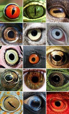 Eye love eyes. (and my mommy:)