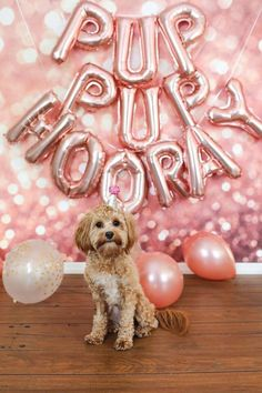 S2 Its My Birthday PERSONALISED Pink Dog Bandana With Pets Name Great Gift For Dogs Small Dogs Shih-tzu Terriers /& Cockerpoo