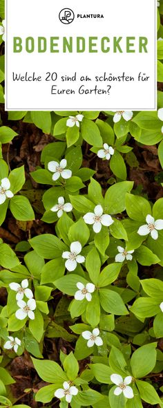 Ground cover: The most beautiful easy-care varieties - Plantura - Garden Care, Garden Design and Gardening Supplies Simple Garden Designs, Herb Garden Design, Modern Garden Design, Vegetable Garden Design, Garden Types, Garden Care, Baumgarten, Design Jardin, Ground Cover Plants