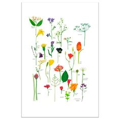 BILD Poster - Flowers in bloom - IKEA Blooming Flowers, Red Couch Living Room, Ikea Family, Flora, Images, Creations, Artwork, Inspiration, Frames
