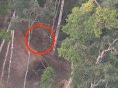 Pořídili v hlubokém pralese dechberoucí videozáběry. Nic takového jste ještě neviděli!