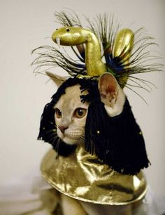 Egyptian Catpatra! Pet Cat Costumes I don't usually like animals dressed up, but, well, ah, no the snake looks out of scale