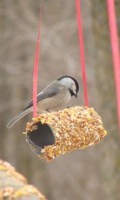 50 Magical Bird-feeders That Will Attract Birds in Your Garden | http://buzz16.com/magical-bird-feeders-that-will-attract-birds-in-your-garden/ #Birds