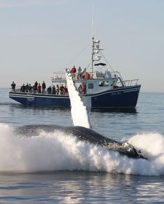 Whale Watching in Brier Island, Nova Scotia, Canada