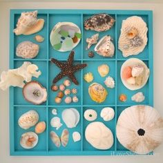 table display of #shells from #catisland #bahamas