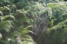 flowers spiderweb