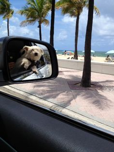 1000 Images About Dogs Love Beaches On Pinterest Dog