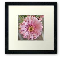 'Pink Gerbera' Framed Print by ellenhenry Pink Gerbera, Pink Carnations, Framed Prints, Canvas Prints, Art Prints, Floral Photography, Bunch Of Flowers, Pale Pink, Decorative Throw Pillows