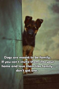 This is the best advice I could ever give someone trying to decide whether or not to get a dog. - Ronni