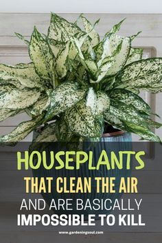Houseplants That Clean The Air And Are Basically Impossible To Kill - How To Grow The Garden - These 12 plants are the most effective for removing indoor toxins. Horticulture, Household Plants, Inside Plants, Best Indoor Plants, Ornamental Plants, Container Gardening, Vegetable Gardening, Succulent Containers, Container Flowers