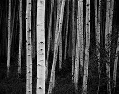 John Sexton, Aspen Forest