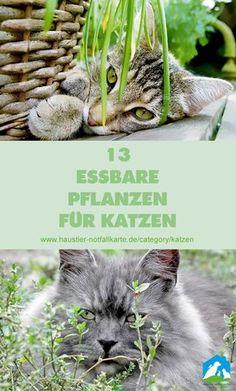 13 essbare Pflanzen für Katzen - jetzt im Haustier Notfallkarte Blog! #katzen #diy