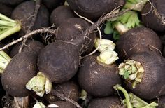Gaining gourmet popularity, black radishes have notable looks and flavor. Learn about growing black radishes from the experts at DIY Network. Cadeau Bio, Culture, Plantation, Health Benefits, Harvest, Spanish, Stuffed Mushrooms, Fruit, Plants