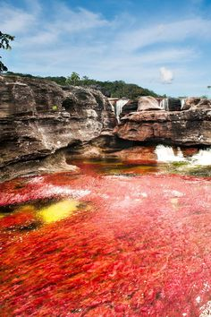 The most beautiful river is in Colombia! In La Serrania de La Macarena you'll find the 5 colors river, named Caño Cristales. Don´t miss this incredible paradise Trip To Colombia, Colombia Travel, Beautiful World, Beautiful Places, Rainbow River, Ushuaia, Photos Voyages, South America Travel, Places To See