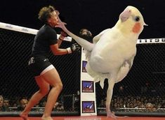 And thus, a new boxing legend twas born! Animal Jokes, Funny Animal Memes, Funny Animal Pictures, Stupid Funny Memes, Cute Little Animals, Cute Funny Animals, Funny Cute, Funny Birds, Cute Birds