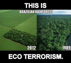I don't think it is the Brazilian rainforest. But I get it, deforestation sucks. Save Our Earth, Save The Planet, Salve A Terra, Brazilian Rainforest, Amazon Rainforest, Wild Animals Attack, Our Environment, Environmental Issues, Environmental Posters