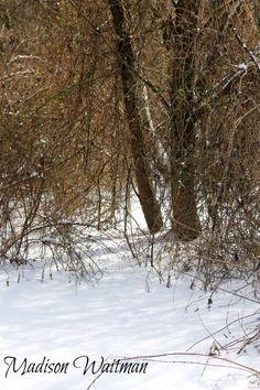 Winter...Madison Waitman Photography