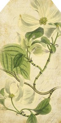 Dogwood ~ there are others on the website ~ free vintage printables
