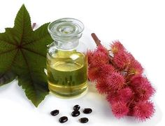 Castor oil was used for centuries throughout the world to treat health problems…