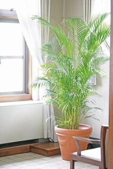 Tall Indoor Plants