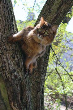 catazoid:  The common squirrel in it's natural habitat
