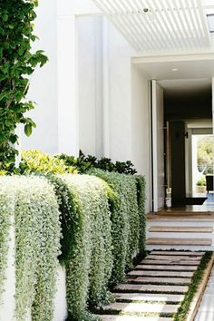 Gorgeous side garden and entryway / Hermoso jardín lateral Dream Garden, Home And Garden, Garden Modern, Outdoor Walkway, Paver Walkway, Side Walkway, Paver Sand, Paver Edging, Paver Stones