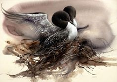 """""""Nesting Loons"""" by Lee Bogle"""