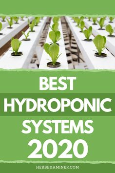 In today's guide, we'll be taking a comprehensive look at hydroponics, an accelerated soil-less growing Indoor Hydroponic Gardening, Hydroponics Setup, Hydroponic Vegetables, Hydroponic Farming, Hydroponic Growing, Growing Plants, Indoor Garden, Vertical Hydroponics, Aquaponics System