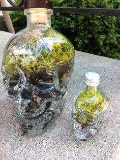 Terrarium Good idea for my skull bottle!