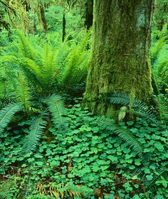 Love moss and fern!