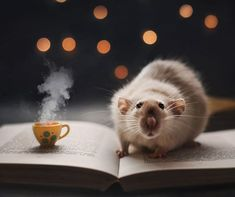 Welcome Baby Wallpaper 29 Ideas Animals And Pets, Funny Animals, Cute Animals, Strange Animals, Rats Mignon, Weird Animal Facts, Funny Hamsters, Cute Squirrel, Cute Rats