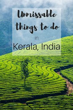 10 unmissable things to do in Kerala Visiting Kerala for the first time? Here are 10 unmissable things to do in Kerala to get on your itinerary. Kerala Travel, India Travel Guide, Asia Travel, Travel Tips, Kerala Tourism, Travel Guides, Munnar, Kochi, Cool Places To Visit