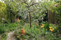 Food Forest, fruit tree guild