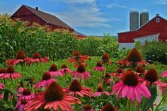 Flowers and Amish Farm House - Rustic Photography, via Etsy.