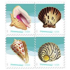 Seashells Postcard Stamp - perfect for Save the Date, RSVP, Thank You postcards.