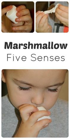 Exploring marshmallows with the five senses. Part of M is for marshmallow theme from Fantastic Fun and Learning.
