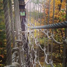 Go Ape -an extensive use of Cargo Nets for their obstacle courses.