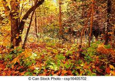 Stock Photo - Enchanted forest - stock image, images, royalty free photo, stock photos, stock photograph, stock photographs, picture, pictures, graphic, graphics