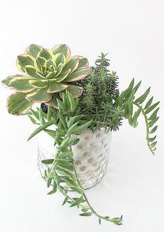Succulent arrangement - Bungalow M.