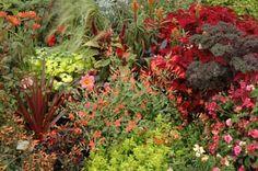 Eenjarigen Zomerbloeiers Plants, Plant, Planets