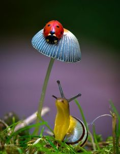 Forest scene. Ladybug on mushroom with snail.