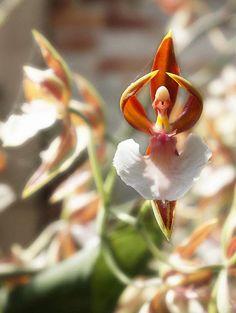 17 Flores que parecen otra cosa - Vida Lúcida