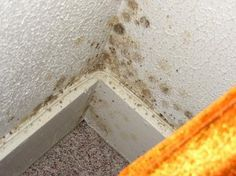 Homestead Survival: Three ways to kill mold naturally Cleaning Mold, Cleaning Hacks, Cleaning Supplies, Mold In Basement, Holistic Nutrition, Homestead Survival, Natural Cleaning Products, Clean House, Good To Know