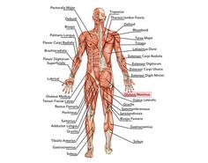 Pin by alphadogg fitness on weightloss strength training pinterest relateret billede ccuart Images